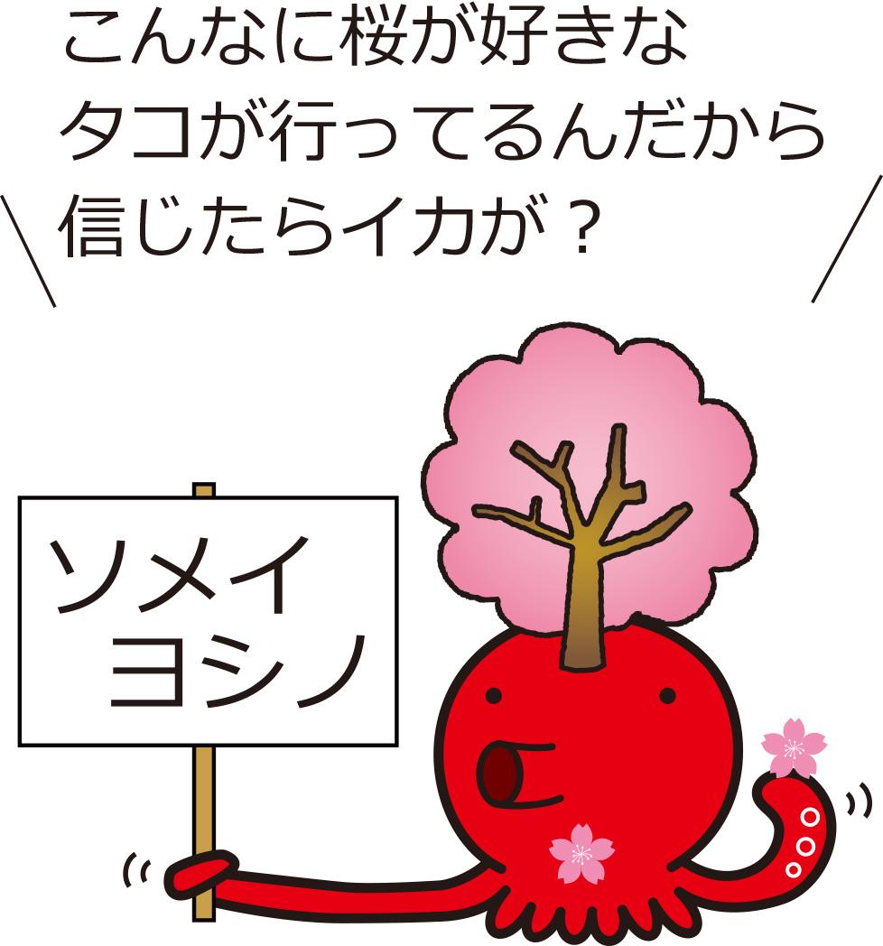 こんなに桜が好きなタコが行ってるんだから信じたらイカが?